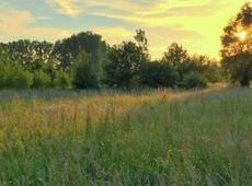 Natuur in Dendermonde